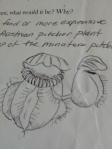 Bill's illustration of Cephalotus follicalaris