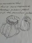 Bill's illustration of Cephalotus follicalaris